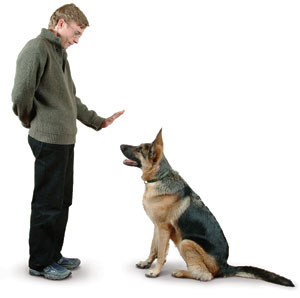 become a dog trainer How to Become a Dog Trainer