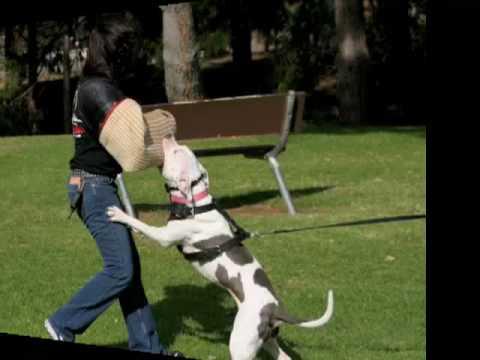 become a dog trainer2 Become a Dog Trainer / Canine Behaviourist