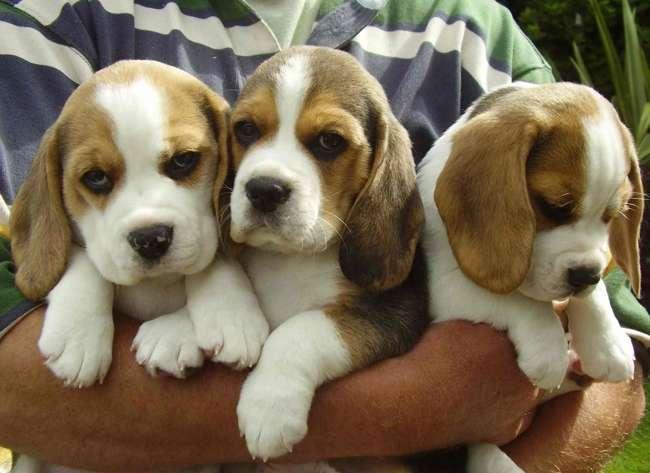 Best dog breeds for children dogs for kids family friendly - Best dog breeds kids ...