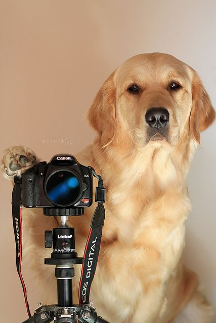 This dog takes your photo funny picture