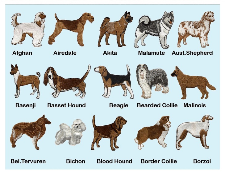 AKC Dog Breeds AKC small dog complete list