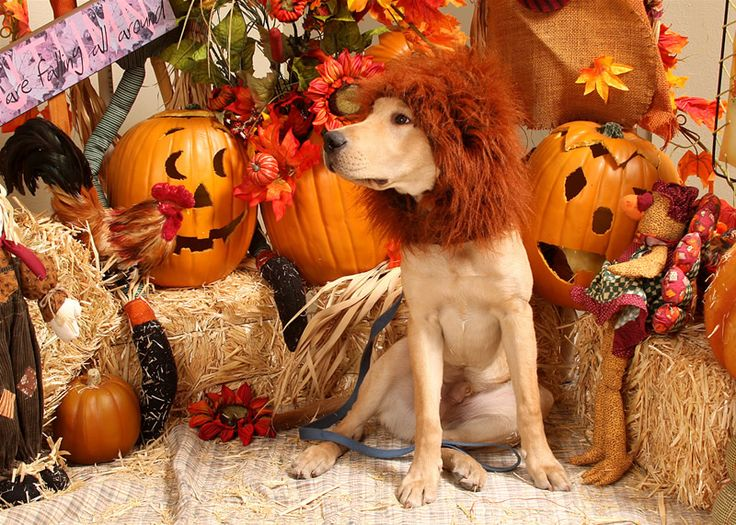 halloween funny dog pictures