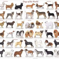 many medium dog breeds