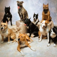medium dog breeds list