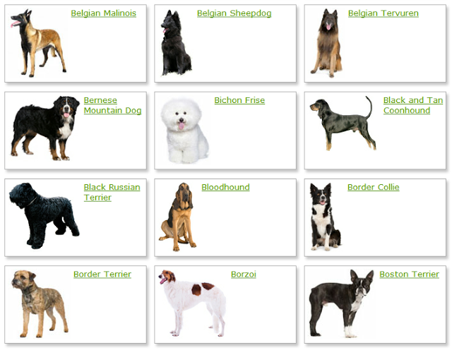 medium dog breeds Dog Breeders Guide, Pictures, Videos and Polls