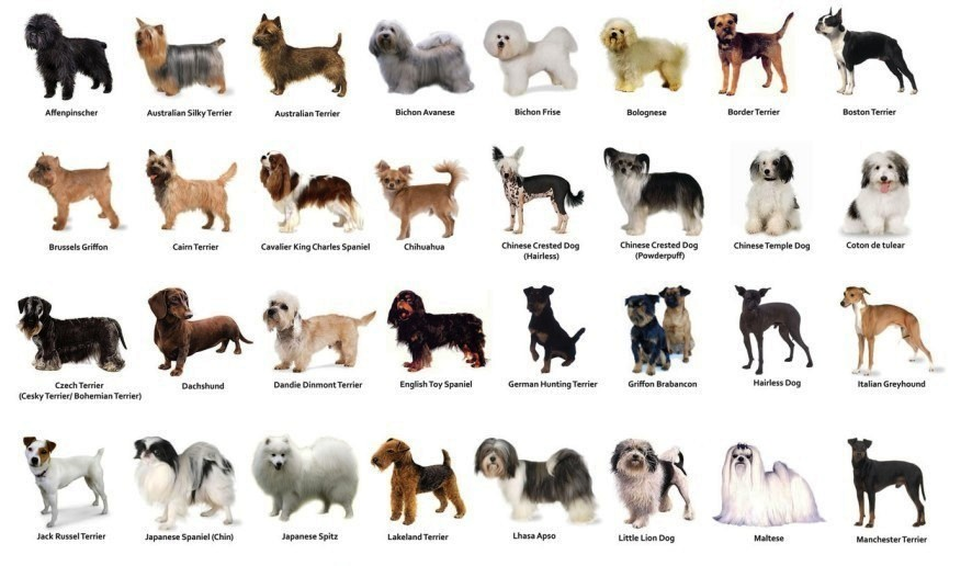 Dog Breeds For Type Of People