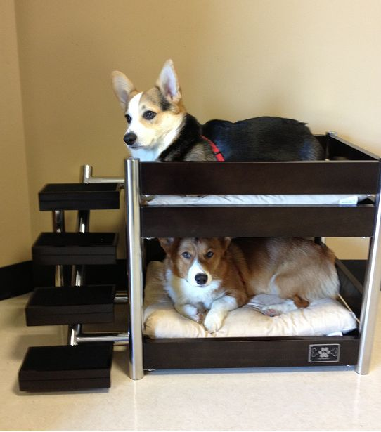 2 in 1 diy dog houses ideas for 2 dogs