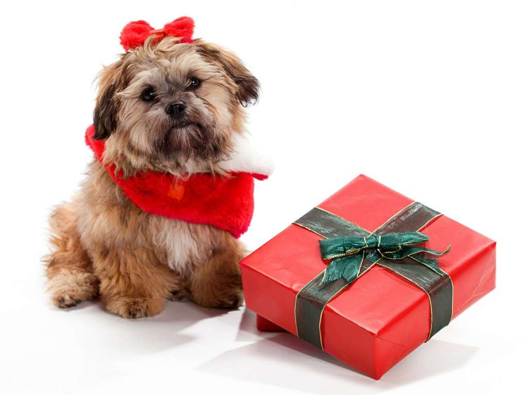 Christmas Gift Ideas for Dogs - Dog Breeders Guide
