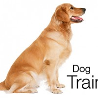Dog Training How To Train Your Dog Facts and Tips