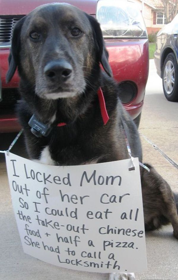 I locked my mom funny dog picture