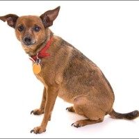 Mixed Breed Healthy Dog Breed