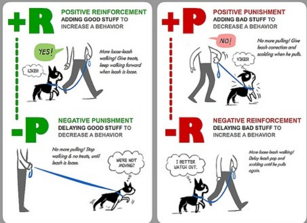 Negative Reinforcement dog training method