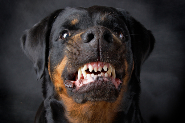 Rottweilers good with kids or not