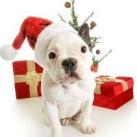 What is your Christmas Gift Ideas for your Dog or Puppy