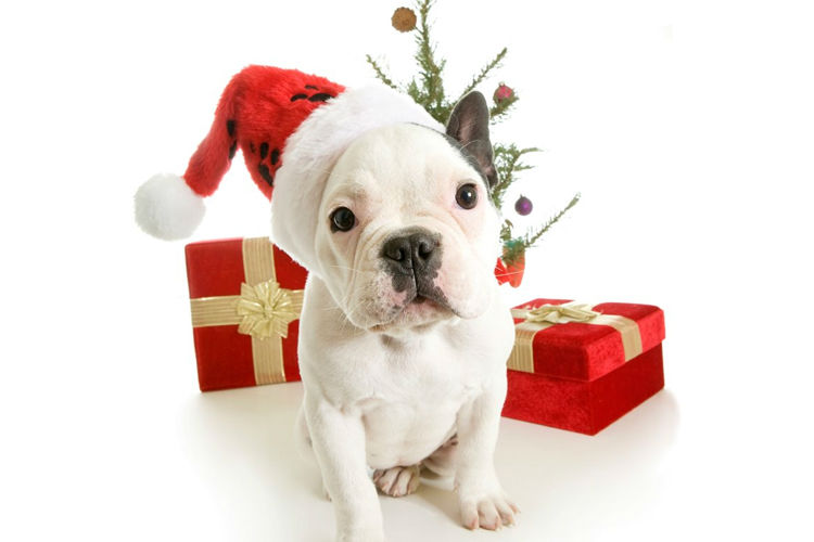 Christmas Gift Ideas for your Dog