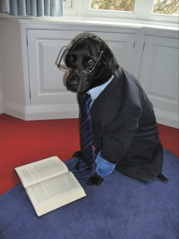 black labrador wants to be shakespeare funny dog picture