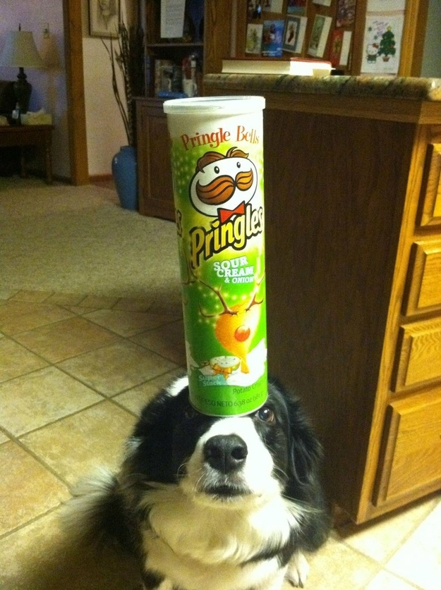 chips packet on the head funny picture