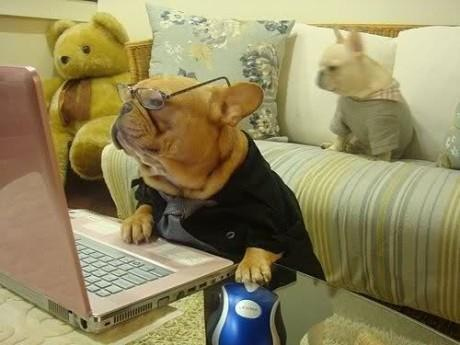 dog doing online shop funny pictures