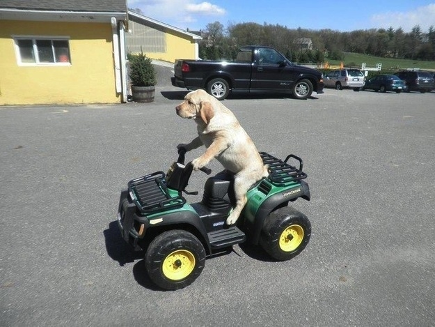 dog driving a tractor funny picture