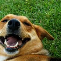 dog life span