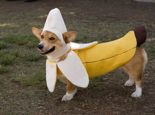 dog like a banana funny fancy dress picture