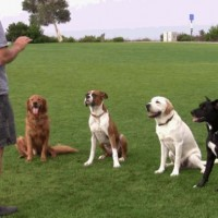 dog training