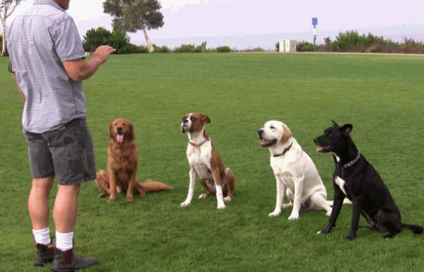 Dog Training: How To Train Your Dog, Facts and Tips