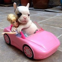 funny dog in toy car