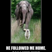 funny dog pictures with captions he followed me home