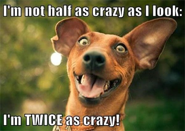 funny dog pictures with captions i am not crazy