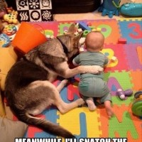 funny dog pictures with captions listen you