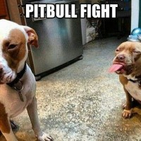 funny dog pictures with captions pitbull fight
