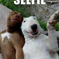 funny dog pictures with captions selfie
