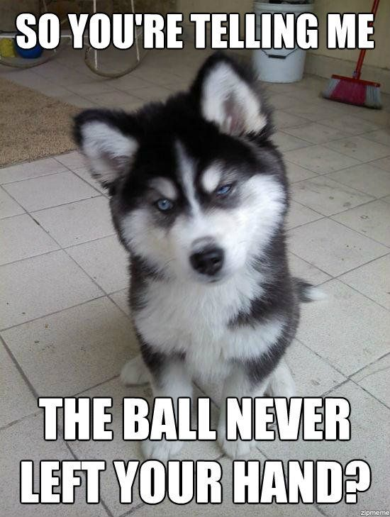 funny dog pictures with captions so you are telling me
