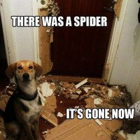 funny dog pictures with captions there was a spider