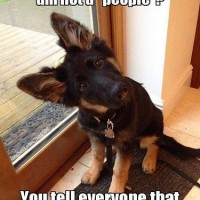 funny dog pictures with captions what do you mean