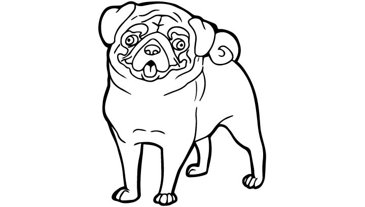 Funny Pug Dog Pictures To Color Dog Breeders Guide