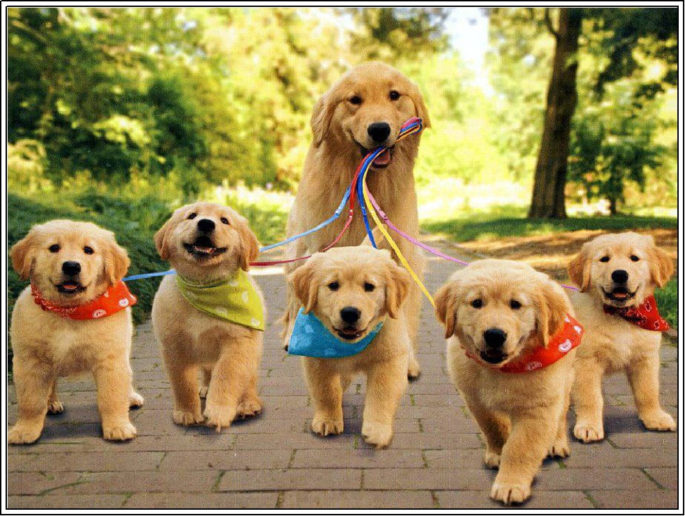 Top Name Ideas for Golden Retrievers