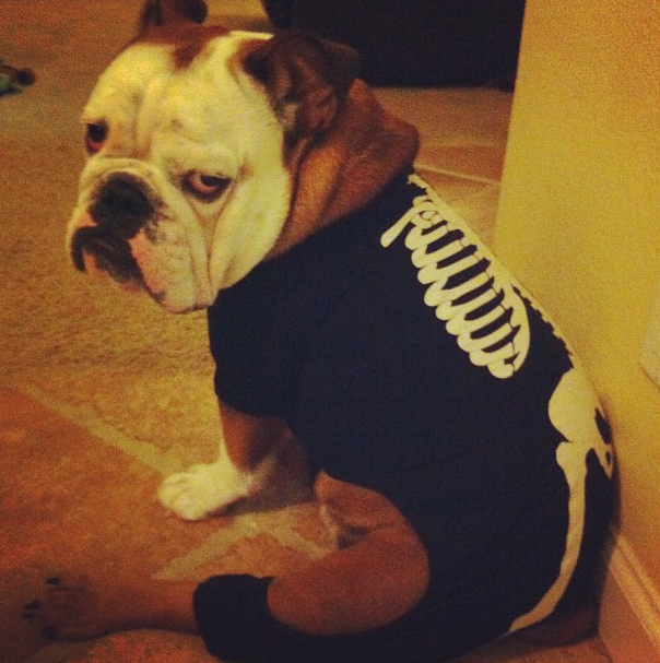 halloween costume ideas for puppy picture