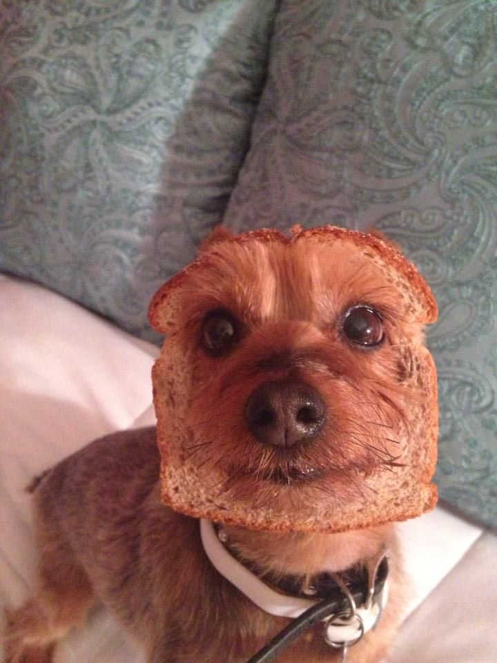 have a bread funny dog picture