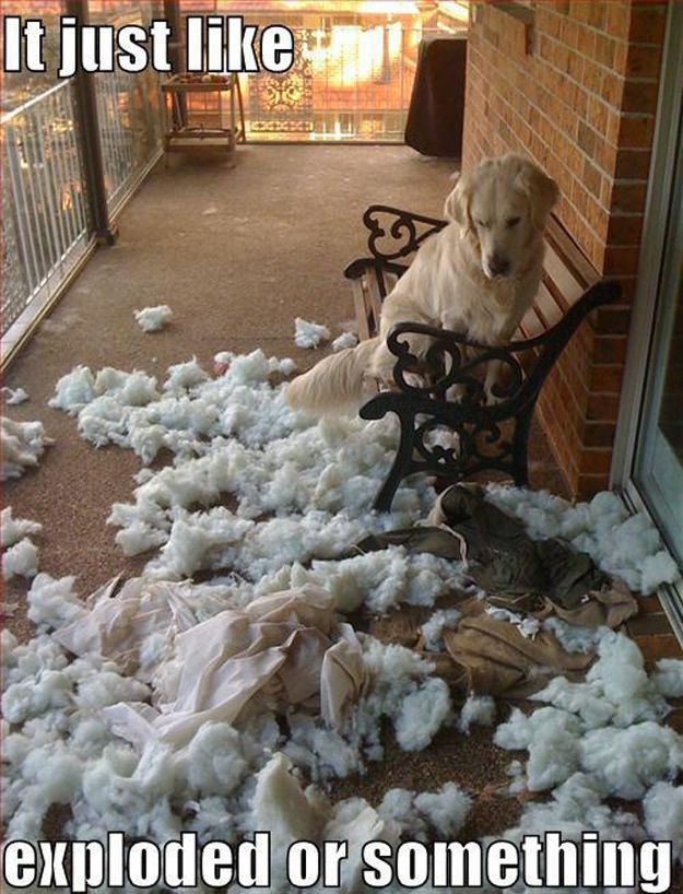 just like exploded funny dog picture