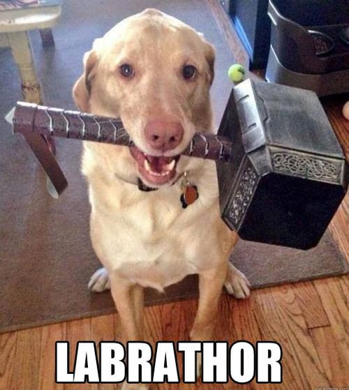 labrathor funny dog picture