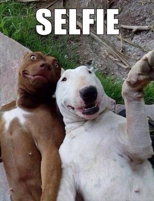 lets have a selfie funny dog picture