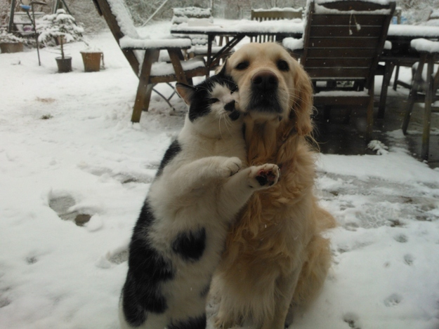 love to be with golden retriever funny dog picture