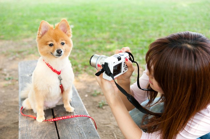 puppy photoshoot picture