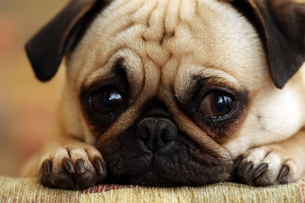 Is It Ok to Cry If your Dog Passes away?