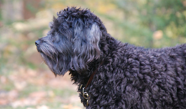 Top 10 Dog Breeds for your Loved Ones