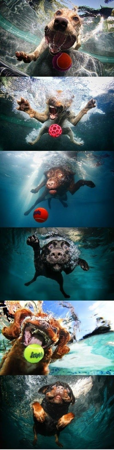 swimming moments funny dog picture