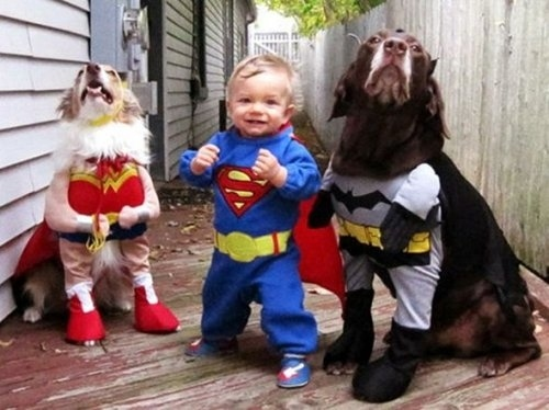 the batman dog and baby funny picture