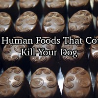 Human Foods That Can Kill Dog
